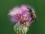 Botanicko-entomologická procházka